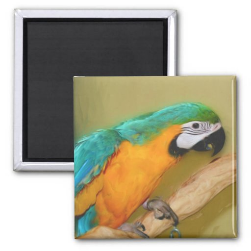 Imán azul de la pintura del loro del Macaw del oro