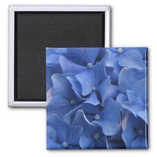 Imán azul de los Hydrangeas