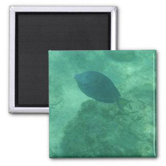 Imán azul del cuadrado de los pescados de Bahamas