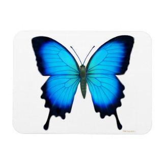 Imán azul del premio de la mariposa de Papilio