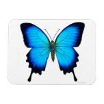 Imán azul del premio de la mariposa de Papilio Uly