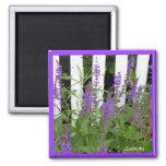 Imán azul púrpura de la cerca de las flores