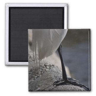Imán blanco de la foto de los pies del pájaro de l