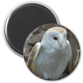 Imán blanco de la lechuza común