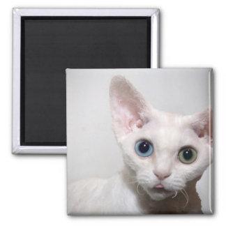 Imán blanco del gatito