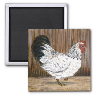 Imán blanco del pollo