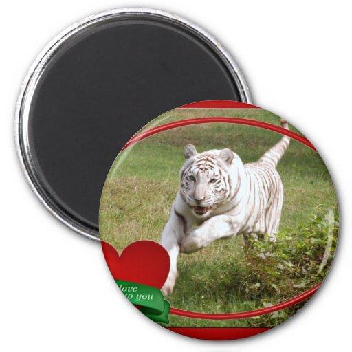 Imán blanco del tigre