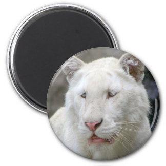 Imán blanco raro del tigre