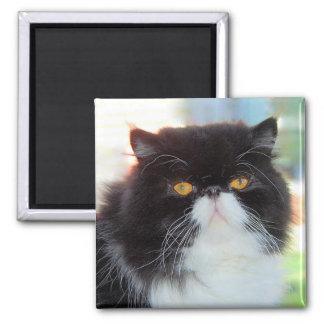 Imán blanco y negro del gato persa