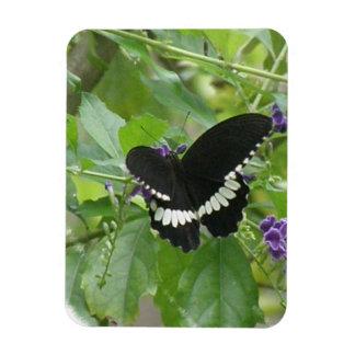Imán blanco y negro del premio de la mariposa