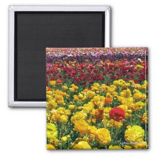 imán - campos de flor coloridos