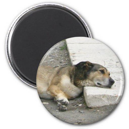 Imán cansado del perro, personalizar