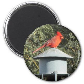 Imán cardinal