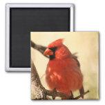 Imán cardinal rojo