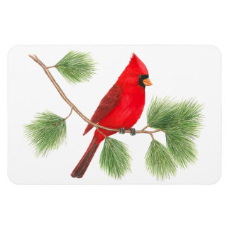 Imán cardinal septentrional de Flexi