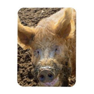 Imán codicioso del refrigerador del cerdo