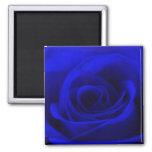 Imán color de rosa azul de medianoche
