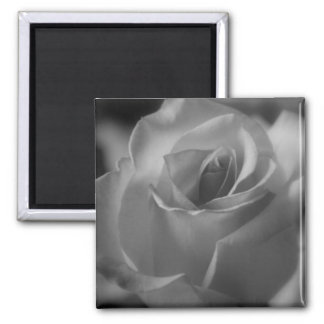 Imán color de rosa blanco y negro