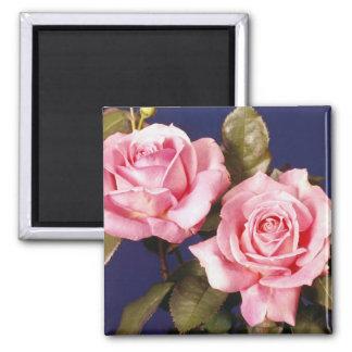 Imán color de rosa de la elegancia