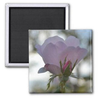 Imán color de rosa delicado