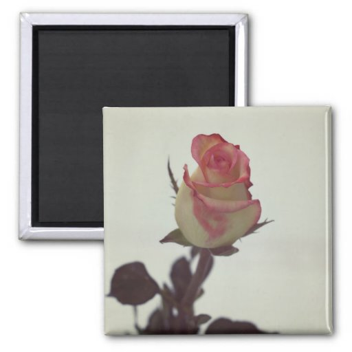 Imán color de rosa oscuro