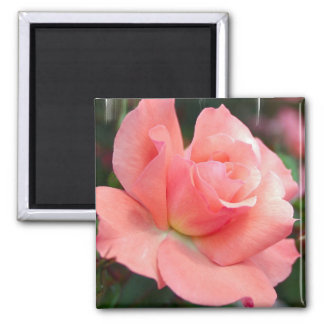 Imán color de rosa rosado