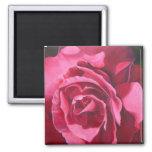 Imán color de rosa rosado de la pintura