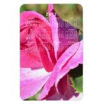 Imán color de rosa rosado del calendario de octubr