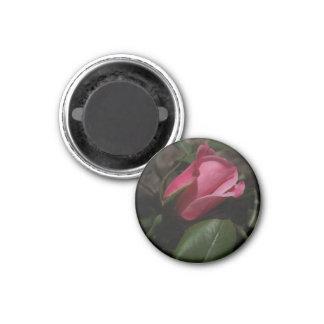 Imán color de rosa rosado oscuro