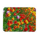 Imán colorido de la impresión de los tulipanes de