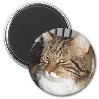 Imán con cabeza de gato