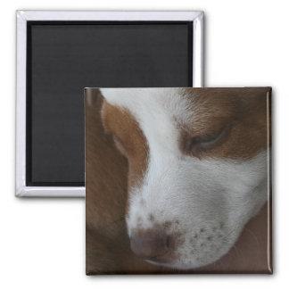 Imán con la nariz roja del perrito del hoyo