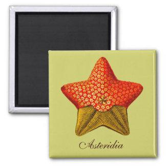 Imán cuadrado de Asteridia (estrella de mar)