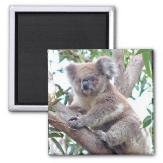 Imán cuadrado de la koala