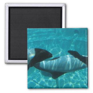 Imán cuadrado de las ballenas subacuáticas