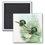 Imán cuadrado de los colibríes coloridos de Gould