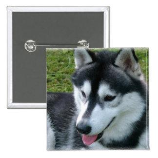 Imán cuadrado del husky siberiano pins