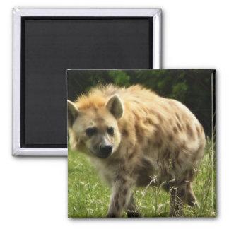 Imán cuadrado del Hyena