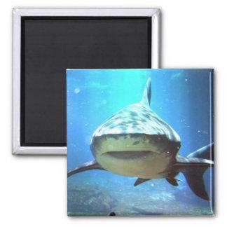 Imán cuadrado del tiburón