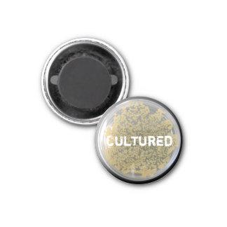 """Imán """"cultivado"""" de la placa de cultura de las bac"""