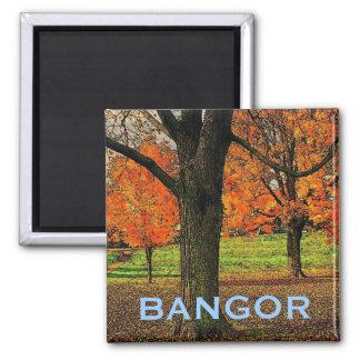 Imán de Bangor