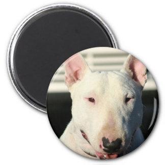 Imán de bull terrier