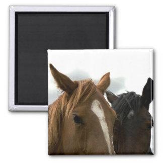 imán de caballo del amor