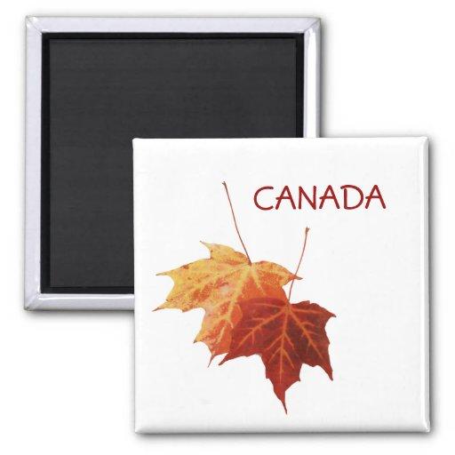 imán de Canadá de dos hojas de arce