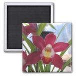 Imán de color rosa oscuro de la orquídea