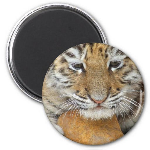 Imán de Cub de tigre