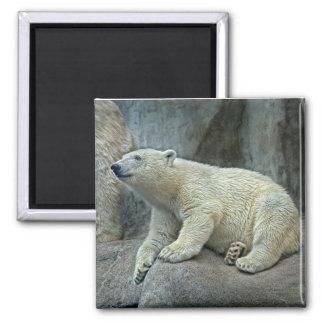 Imán de Cub del oso polar
