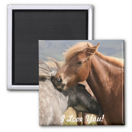 Imán de dos caballos te amo