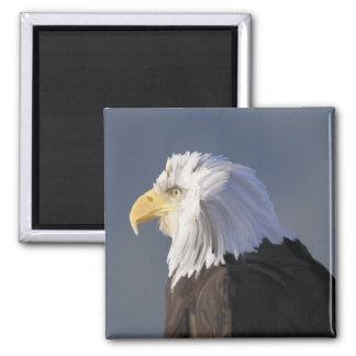 Imán de Eagle