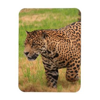 Imán de Jaguar